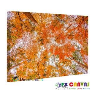 Gökyüzü ve Yapraklar Kanvas Tablo