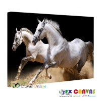 Beyaz Atlar Siyah Arka Plan Kanvas Tablo