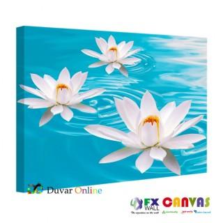 A103-002 Suda Büyüyen Nilüfer Çiçekleri Kanvas Tablo