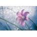 3D Çiçek Lily Duvar Posteri