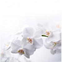 Orkide Çiçeği Duvar Kağıdı