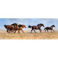 Çölde Koşan Atlar Duvar Posteri