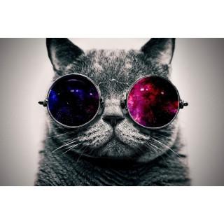 Gözlüklü Kedi Duvar Posteri