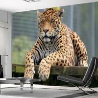 Jaguar Duvar Posteri
