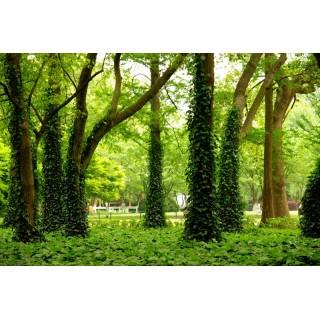 Gövdesi Yaprakla Kaplanmış Ağaçlar Duvar Kağıdı