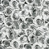 GEKKOFİX FOLYO Roses Beyaz Gri